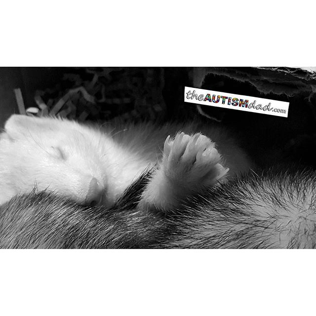 The ferrets are so sweet, especially when they're sleeping...