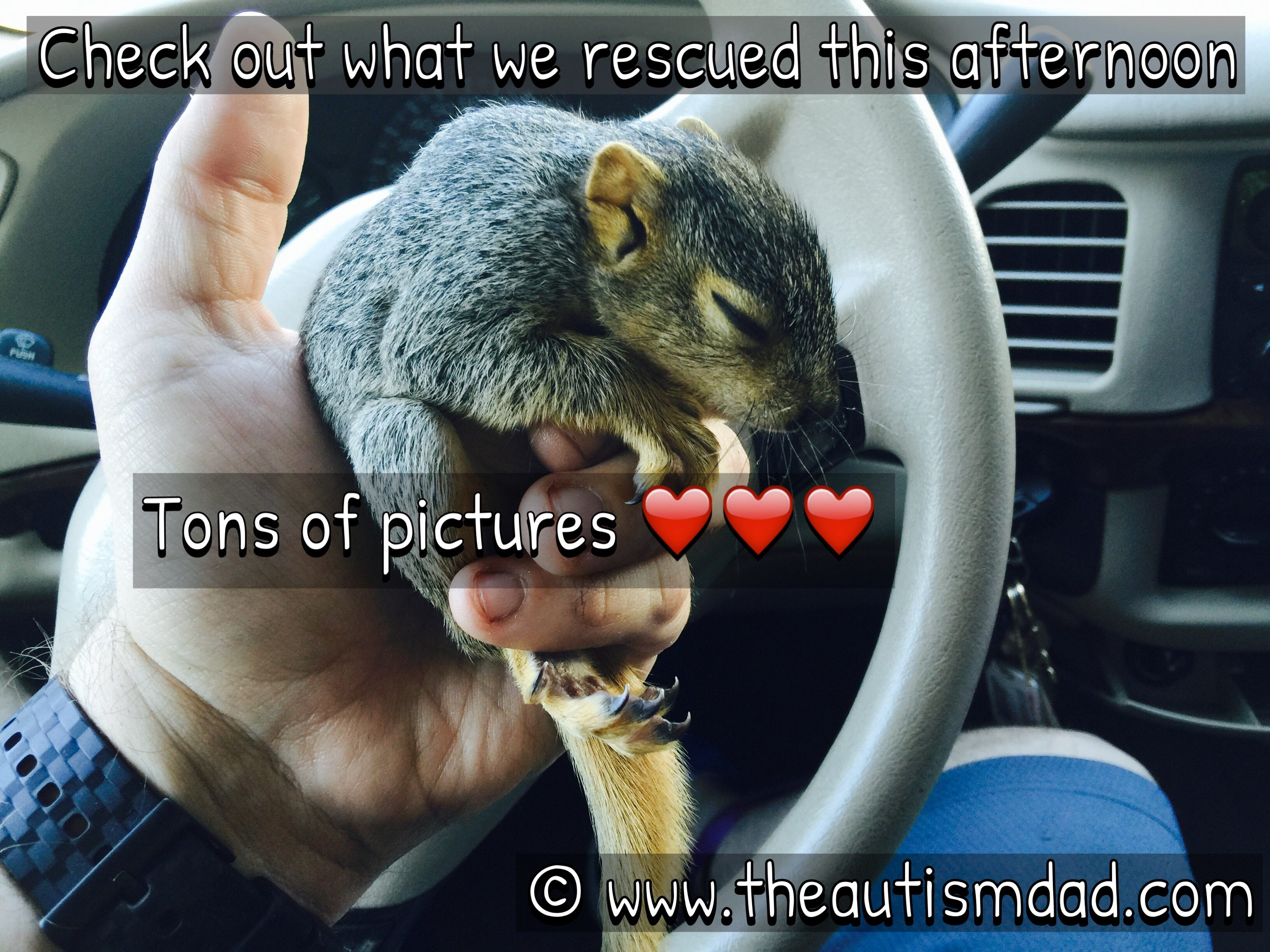 Gavin and I just rescued two beautiful baby squirrels :)