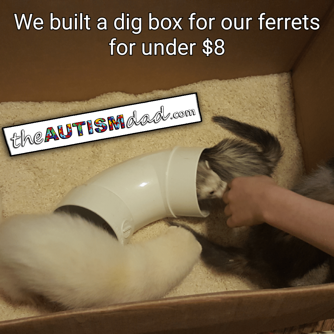 We built a dig box for our ferrets for under $8