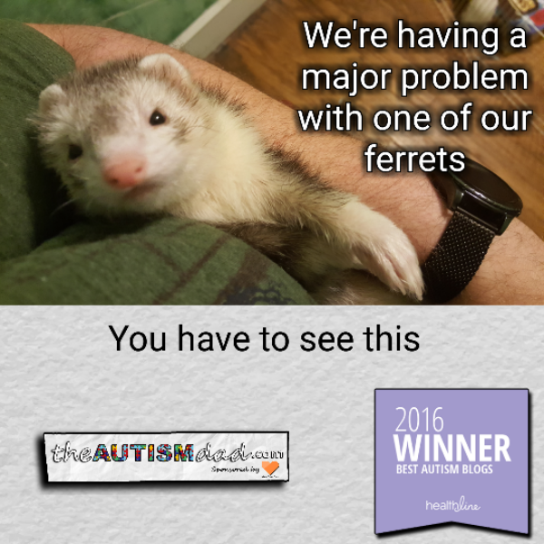 We're having a major problem with one of our ferrets