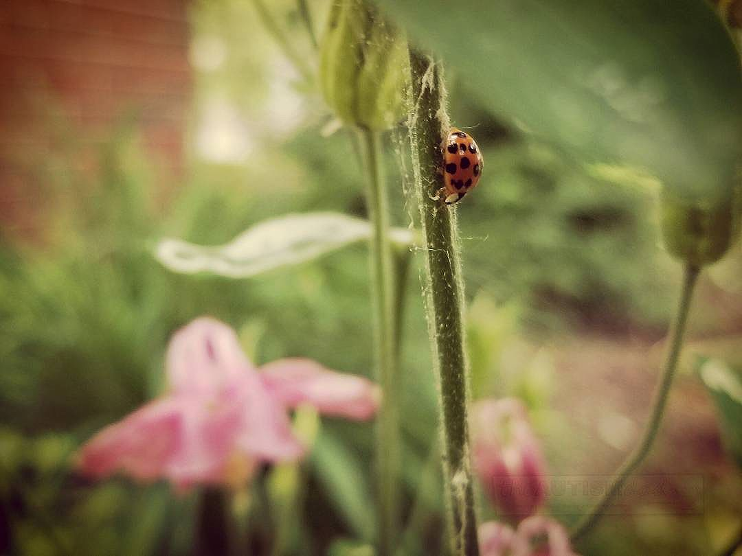 Some food for thought. What are male ladybugs called?  I came across this little ladybug the other day. It got me thinking. What are male ladybugs called?