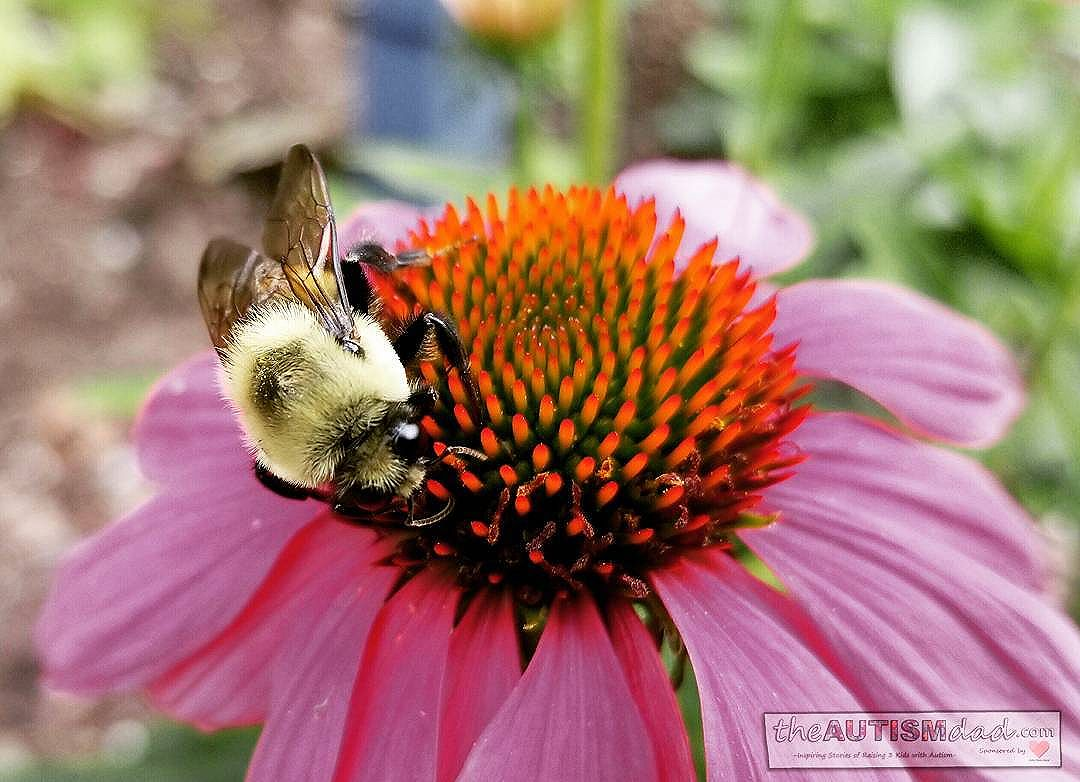 Amazing shot of a bumble bee at work (Photography)