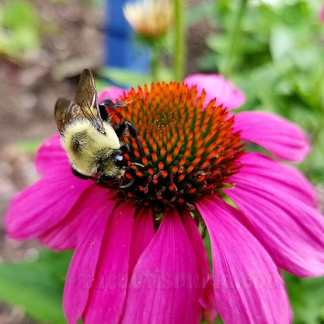 What do you think about this busy bee (Photography)