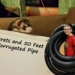 4 Ferrets and 50 Feet of Corrugated Pipe