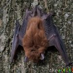 How a tiny brown bat helped me teach my kids a valuable life lesson