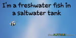 I'm a freshwater fish in a saltwater tank
