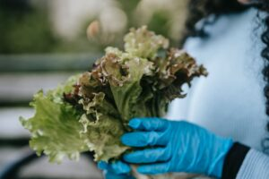 unrecognizable woman in gloves with lettuce leaves in street